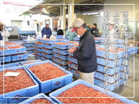 桜えび朝セリ市場風景