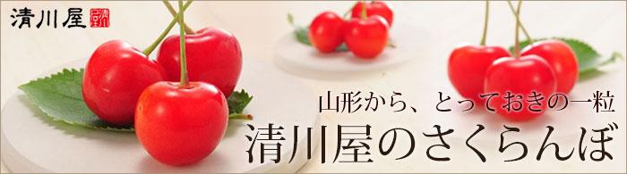 清川屋のさくらんぼ特集