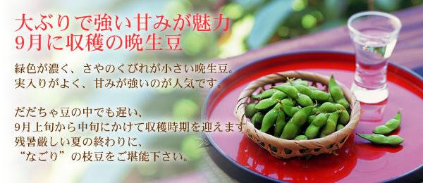 9月に収穫の晩生だだちゃ豆