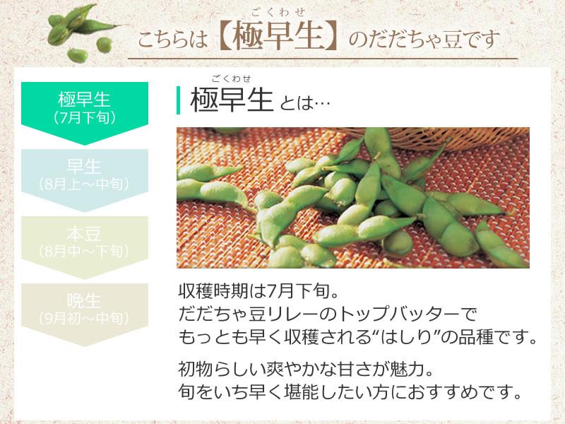 小真木だだちゃ豆は【極早生】のだだちゃ豆です