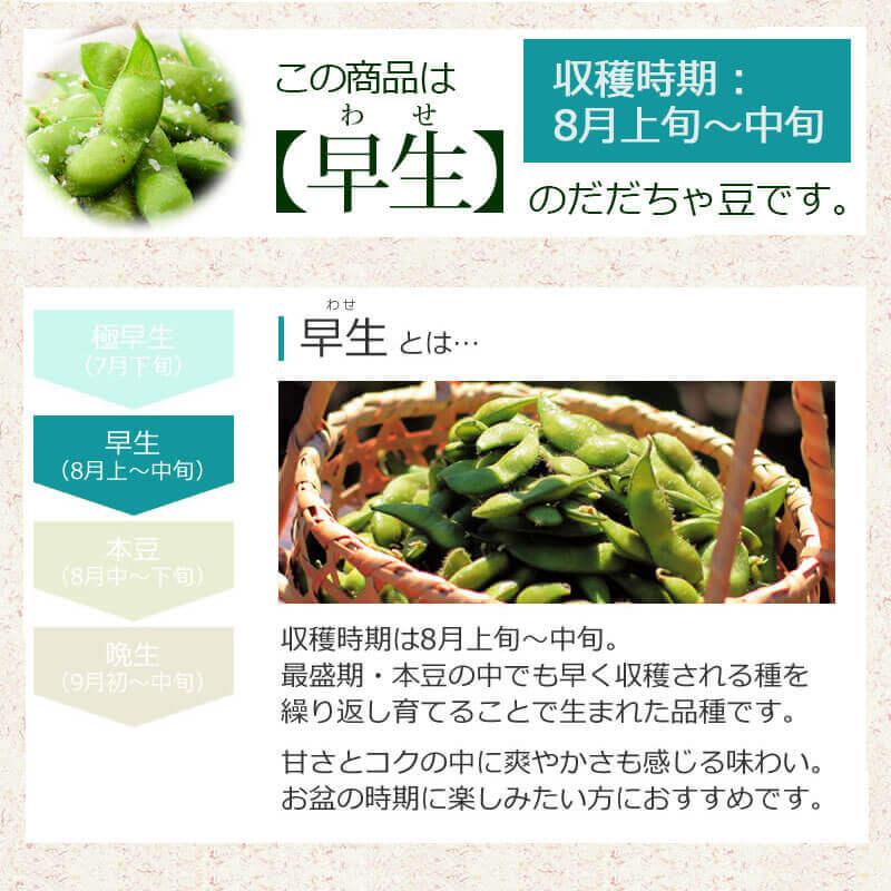 こちらは【早生】のだだちゃ豆です