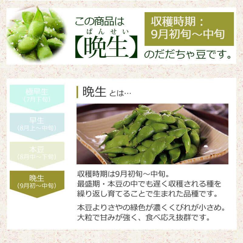 こちらは【晩生】のだだちゃ豆です