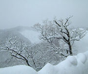 雪待ちふじりんご
