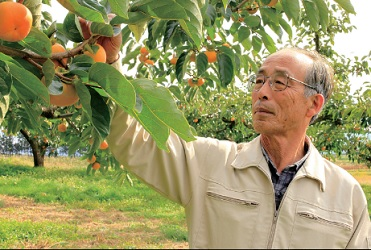 松ヶ岡庄内柿農家さん