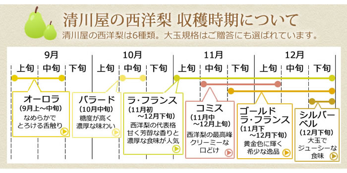 清川屋の西洋梨 収穫時期について