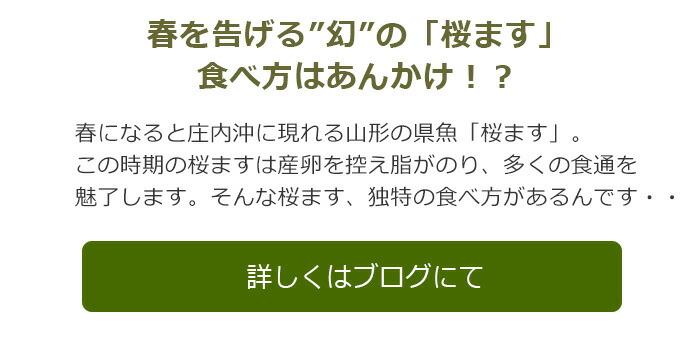 桜マスブログ