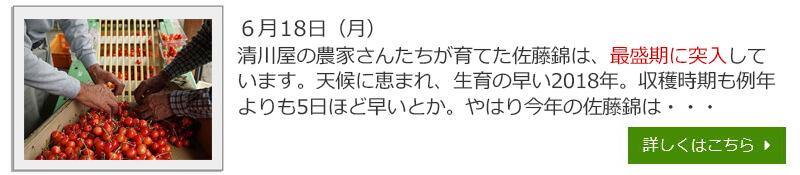 180531さくらんぼ生育日記