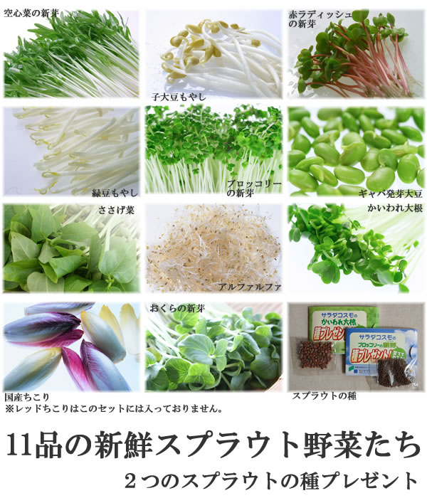 スプラウト vegetables material