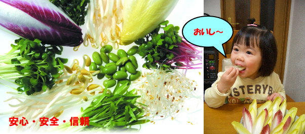Chemical-free vegetables set child がおいしー photograph