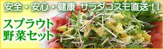【送料無料】新鮮!産地直送!無農薬野菜 贈り物にも…●おためしスプラウト11品野菜セット【国産チコリ入り】