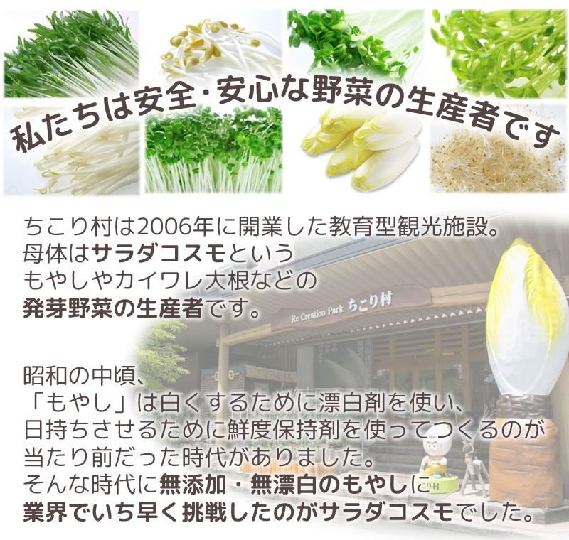私たちは安全・安心野菜生産者です