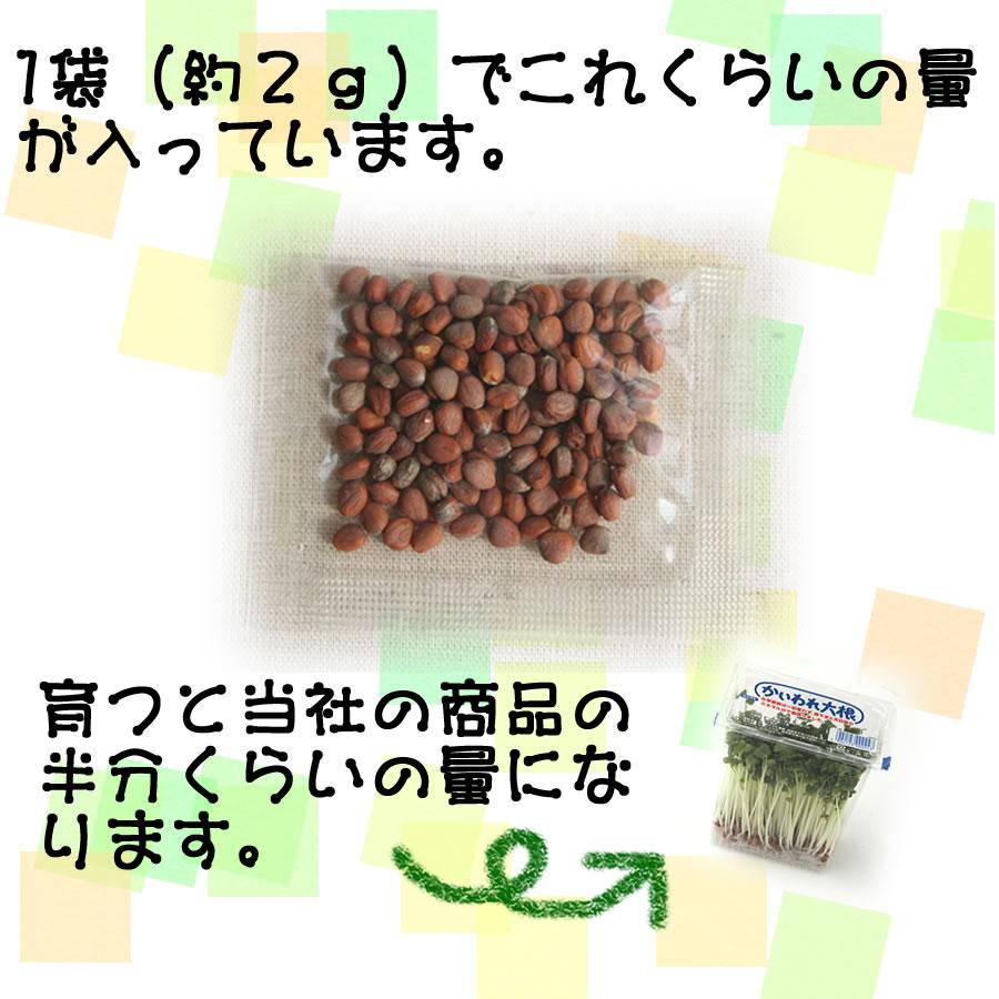 豆もやしの育て方~短期間で楽しめる!カンタン室 …