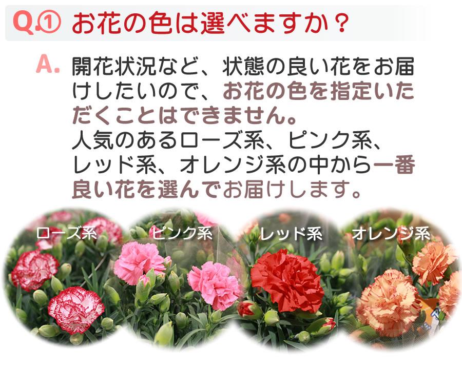 Q&Aお花の色