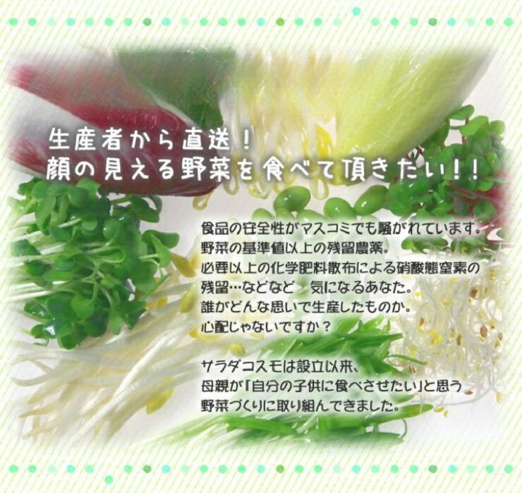 安全・安心・健康 サラダコスモの野菜