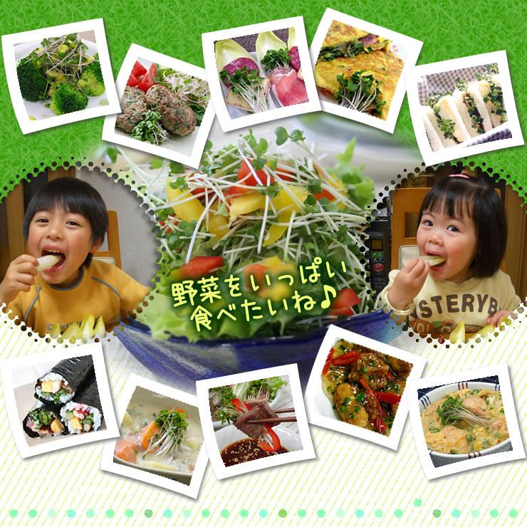 野菜をいっぱい食べたいね♪ えんどう豆の新芽 豆苗