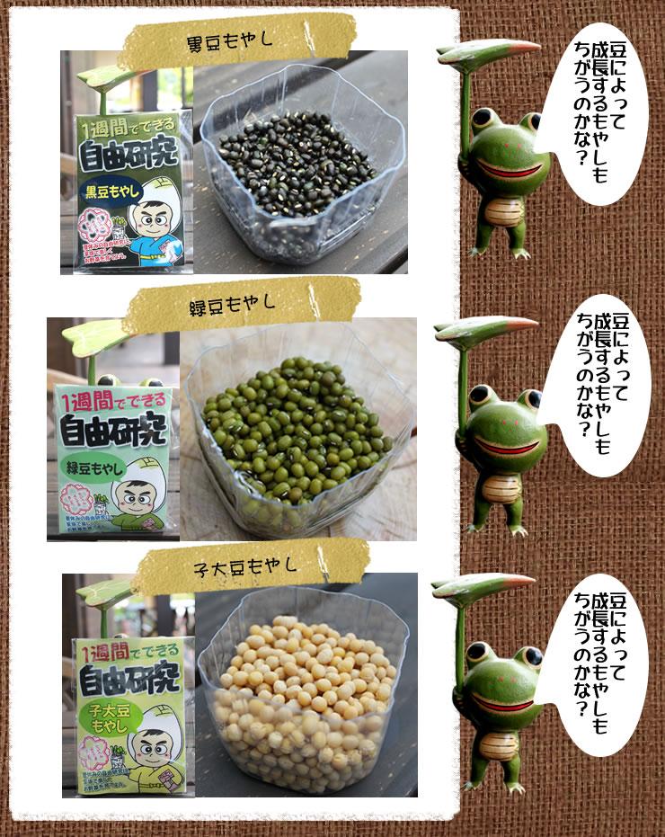 黒豆、緑豆、子大豆