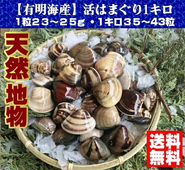 熊本県有明海産【天然地物活はまぐり】1キロ入り3,300円税込・送料無料