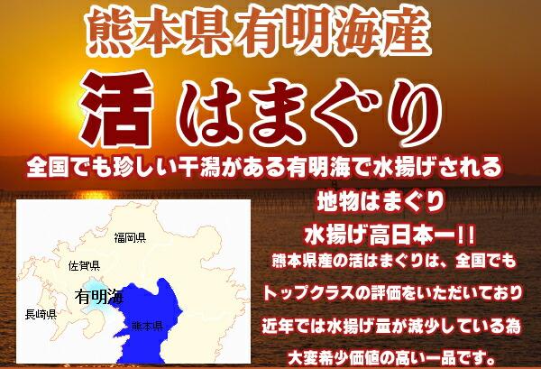 熊本県有明海産【天然地物活はまぐり】全国でも珍しい干潟がある有明海、水揚げ高日本一全国でも高い評価をいただいております。近年では水揚げ量が減少している為大変希少価値の高い一品です