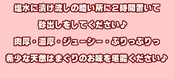熊本県有明海産【天然地物活はまぐり】塩水につけ暗所で二時間程砂抜きをして下さい。