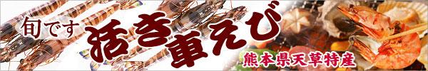 熊本県天草産|活きた車エビ届きます
