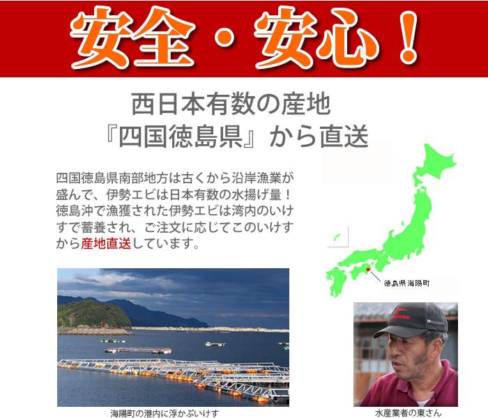 産地は四国徳島県!