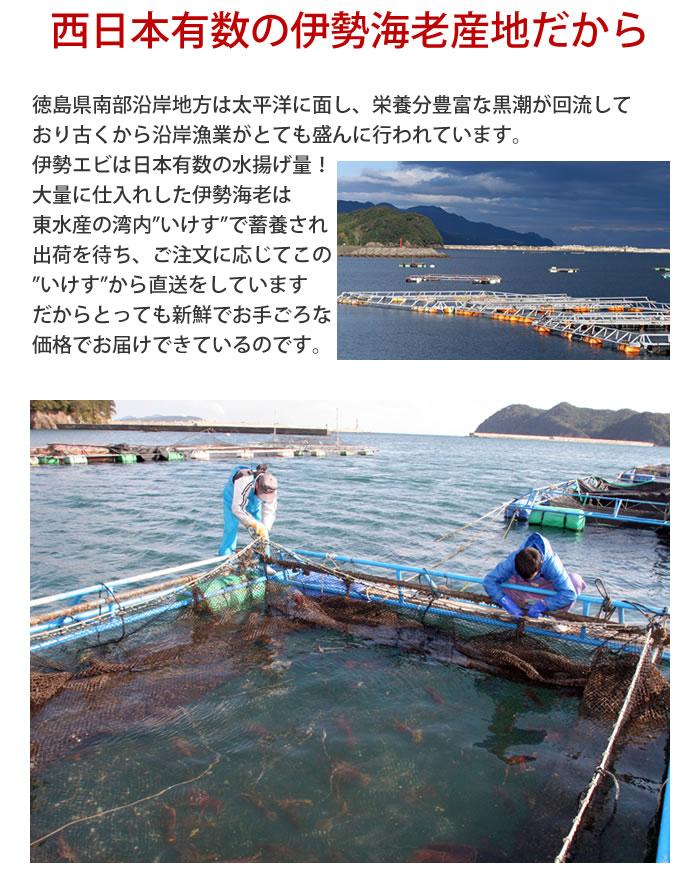 西日本有数の伊勢海老産地から