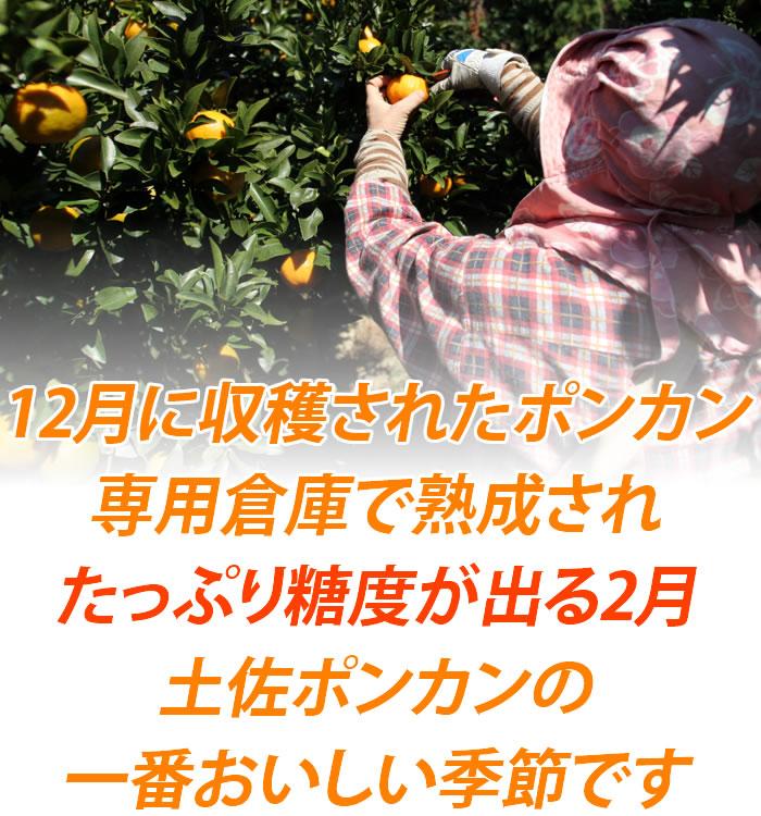 12月に収穫