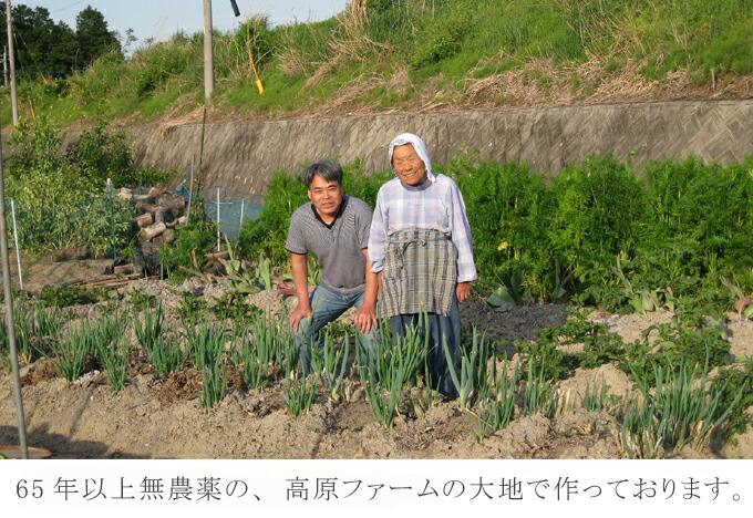 国産 有機栽培オーガニック 無農薬・無化学肥料「イチョウ葉茶」 ギンコウ 銀杏 効果・効能