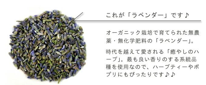 有機栽培オーガニックハーブ 無農薬 無化学肥料 ラベンダー