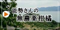 能勢さんの無農薬柑橘