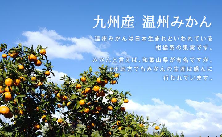 温州みかんは日本生まれ