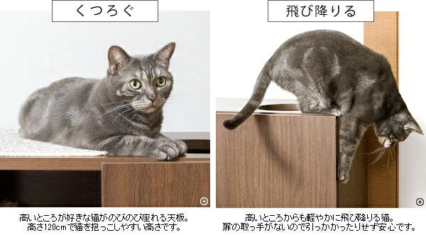 猫インテリア