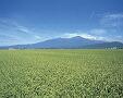 お米はここまで美味しくなれる></A><BR>                               <IMG src=