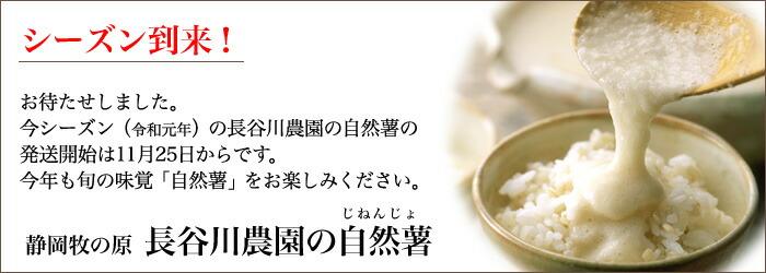 長谷川農園 自然薯(じねんじょ)お届け開始
