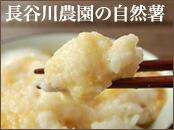 長谷川農園の自然薯