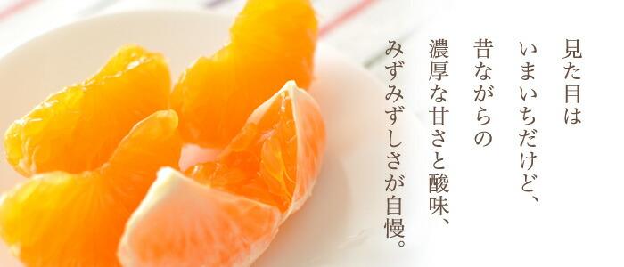 静岡 三ケ日みかん