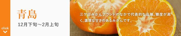 三ケ日みかん 青島