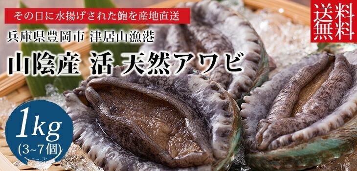 兵庫県津居山港産のアワビ