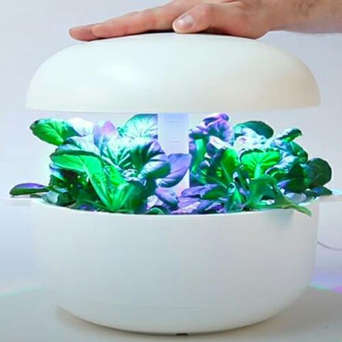 LEDライト付き 水耕栽培キット プラントゥイ6 plantui6