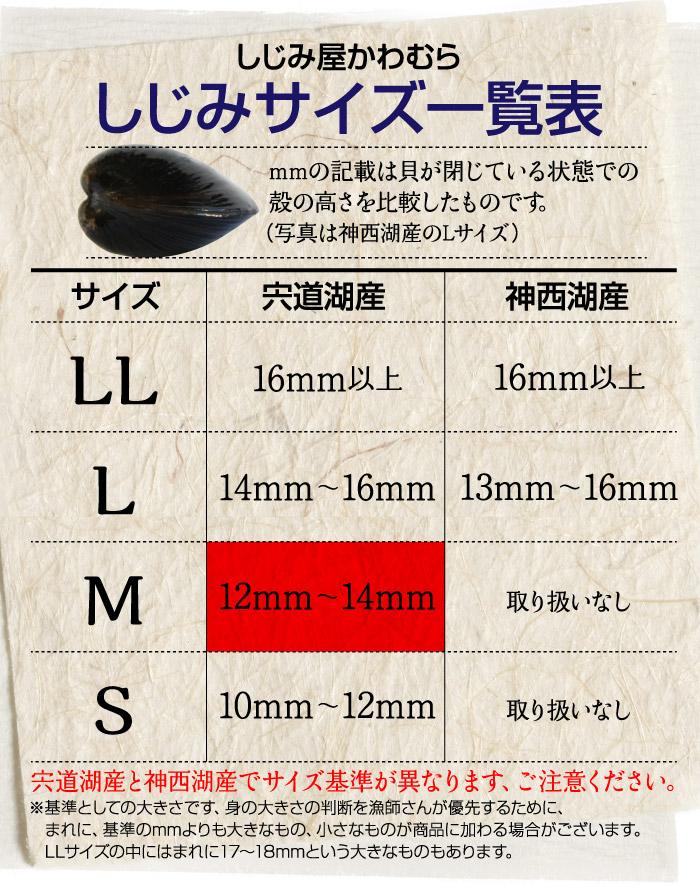 Mサイズは、殻の高さ12ミリ〜14ミリ