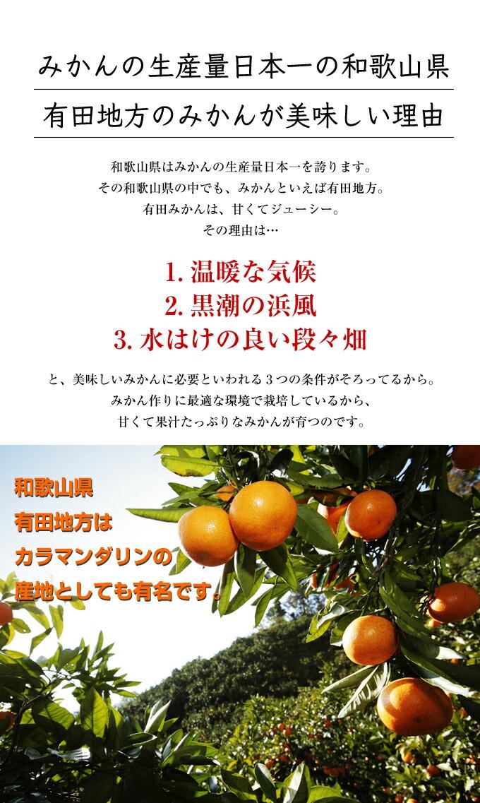 みかんの生産量日本一の和歌山県有田地方のみかんが美味しい理由