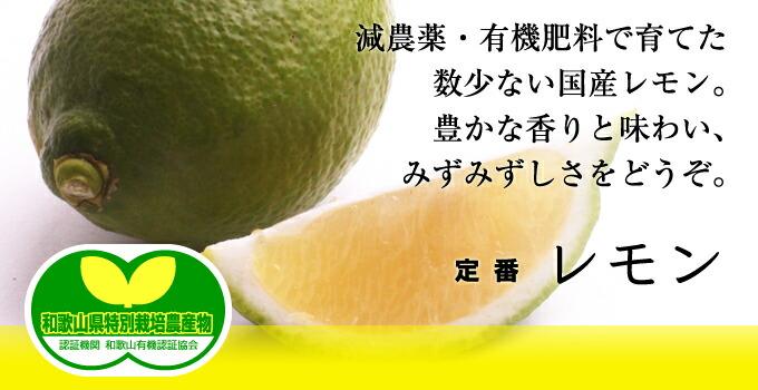 定番レモン