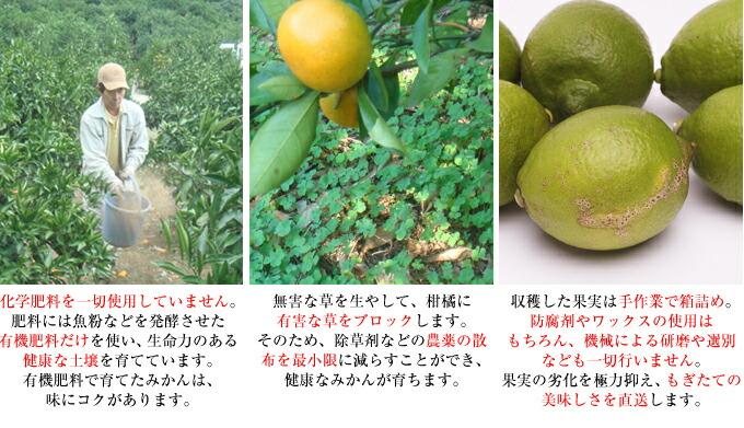 有機肥料のみ・除草剤不使用・手詰め