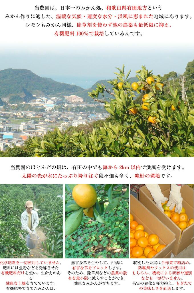 当農園は、日本一のみかん処、和歌山県有田地方にあります。