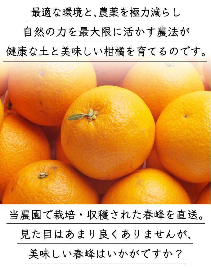 恵まれた環境と、自然の力を最大限に活かす農法が、健康な土を作り、美味しい柑橘を育てるのです。