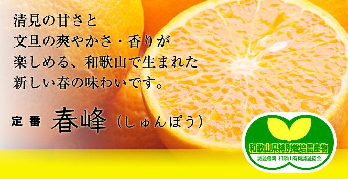 清見の甘さと文旦の爽やかさ・香りが楽しめる、和歌山で生まれた新しい春の味わいです