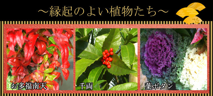縁起物植物