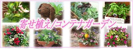 寄せ植えで、お庭やお玄関をセンスアップ!【秋の新作】多数できました。
