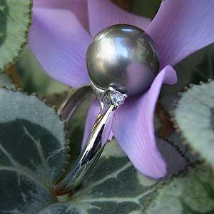 タヒチ黒蝶真珠:K18WG:ホワイトゴールド:リング