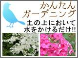 花の種 カンタン ガーデニング